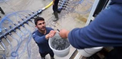 Turkish Cargo, 1 buçuk milyon balığı Umman'a taşıdı