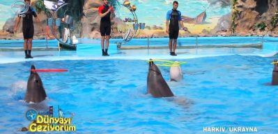 Ukrayna Kharkiv'de çocukların çok eğleneceği yunus ve balina gösterisi