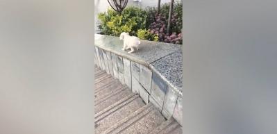 Yavru köpeğin kayak keyfi