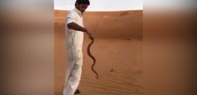 Yılanı tek hamlede felç edip böyle öldürdü!