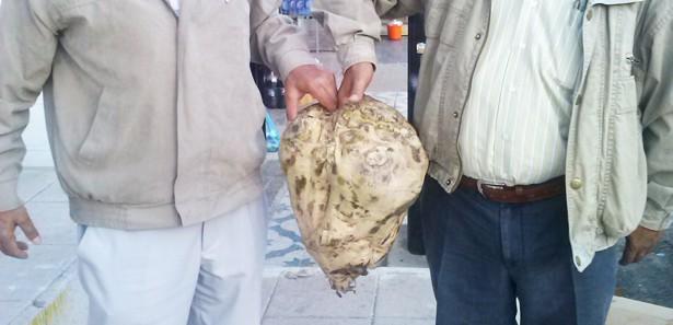 15 kilogramlık şeker pancarı görenleri şaşırttı