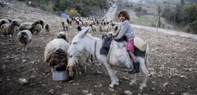 Türkmenler ve Araplar Türkiye'ye geliyor