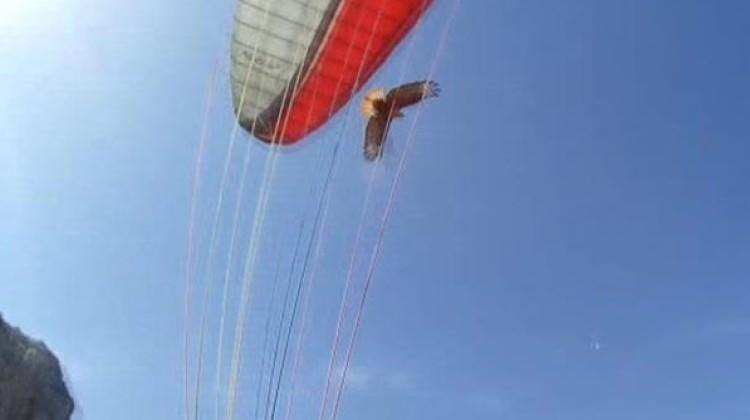 Yamaç paraşütçüsüne kartal saldırısı
