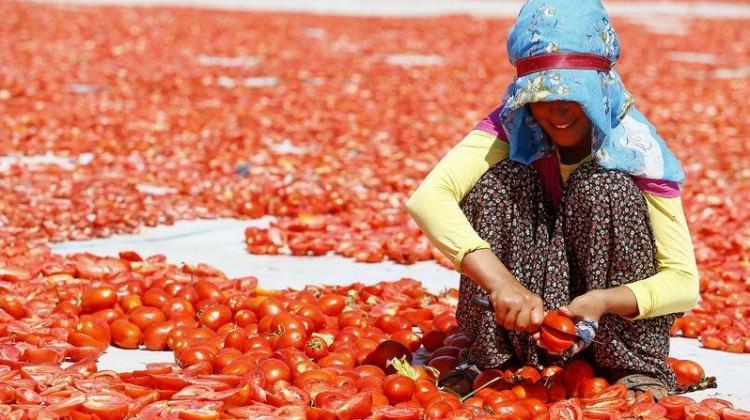 Ege'nin kurutulmuş domatesi dünya mutfağında