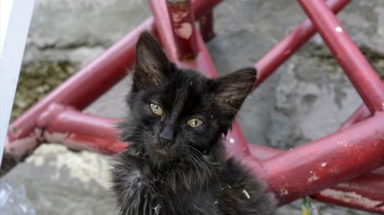 Yavru kedilere yuva aranıyor