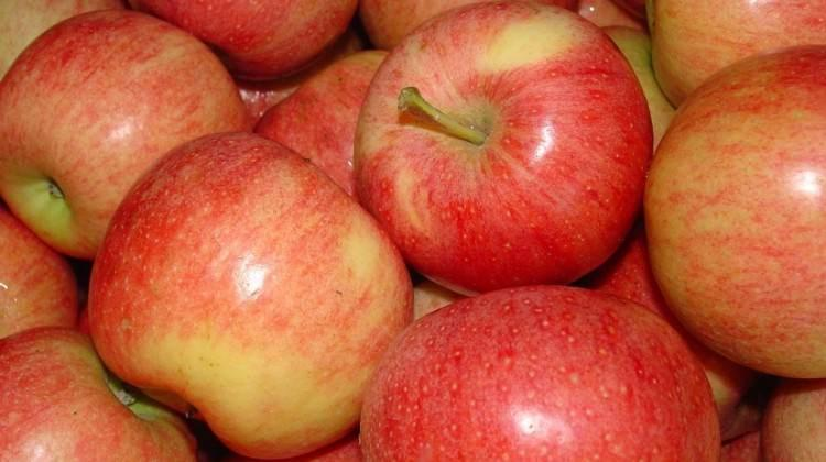 elma ile ilgili görsel sonucu