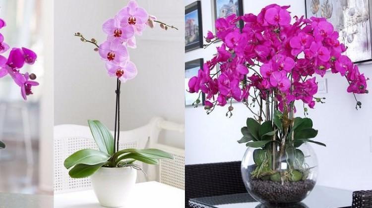 Çiçek Bakımı Nasıl Olmalıdır
