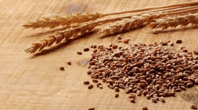 Gümrük vergisi düşünce buğday fiyatı geriledi