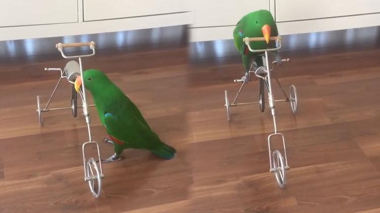 Bildiğiniz tüm papağanları unutun!