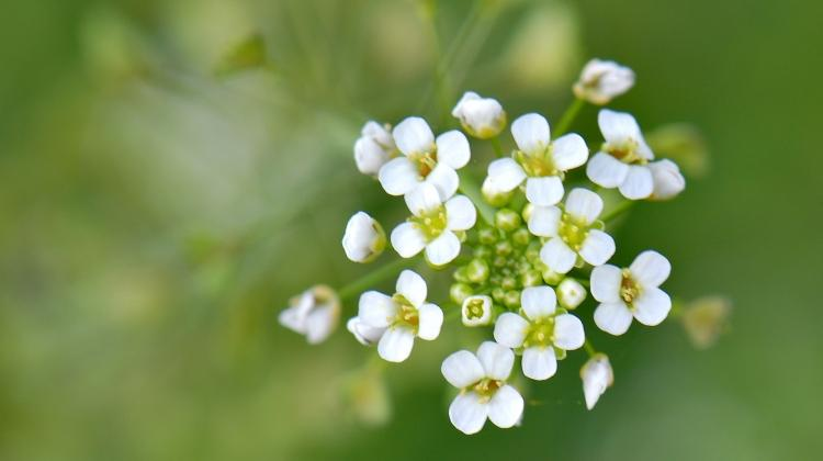 Doğal şifa kaynağı olduğu bilinmeyen bitkiler