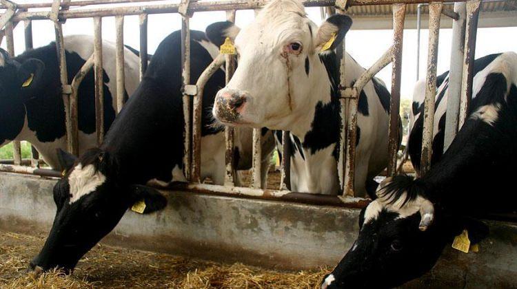 Hayvan alana yüzde 80 hibe desteği!