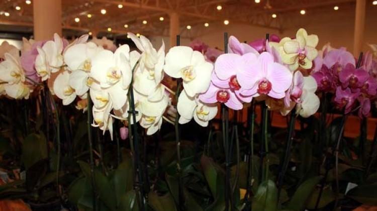Türkiye'nin en büyük orkide pazarları