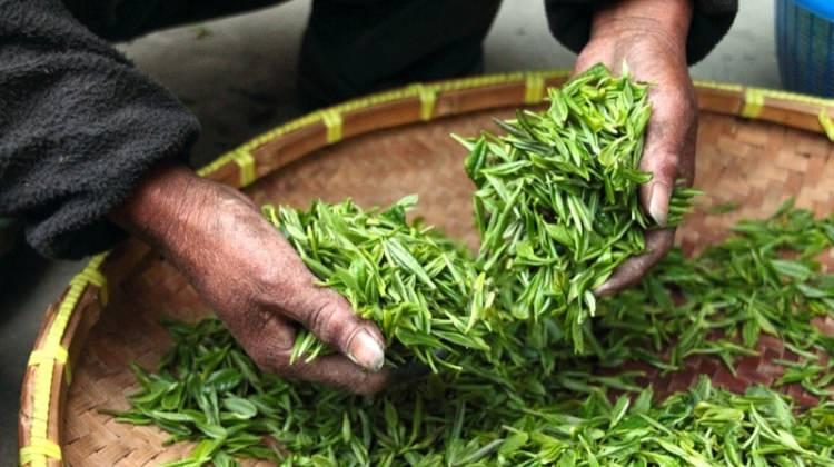 Matcha çayı nasıl demlenir ve nasıl içilir?