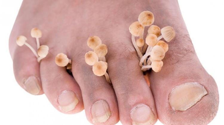mantar ayak ile ilgili görsel sonucu