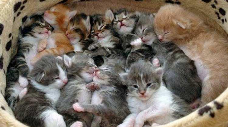 500 kedi çaldı Sebebiyse 50