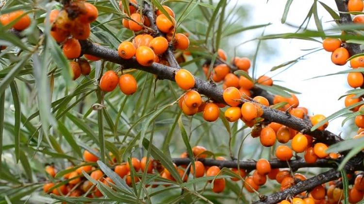 Antioksidan içerikli bitkiler nelerdir?