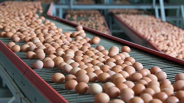 Türkiye, yumurta krizini izlemeye aldı!