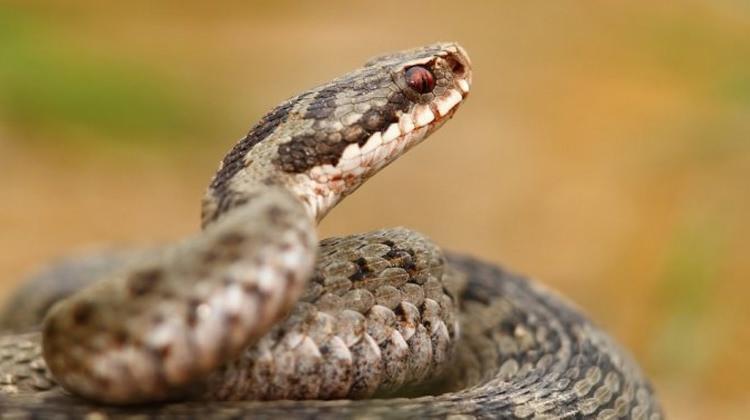 Rüyada yılan görmek nasıl yorumlanır? Rüyada yılan görmenin geniş tabiri