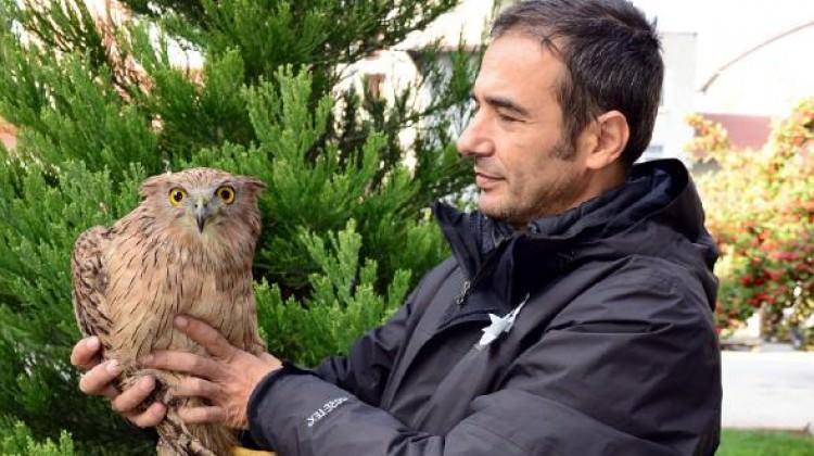 Burdur'da ilk kez balık baykuşu görüldü