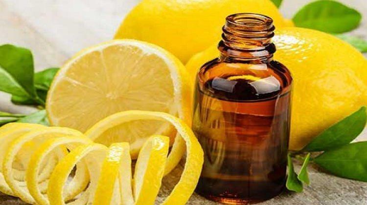 Evde limon kolonyası nasıl yapılır?