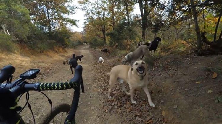 Belgrad Ormanı'nda köpek sürüsünün ortasında kaldı