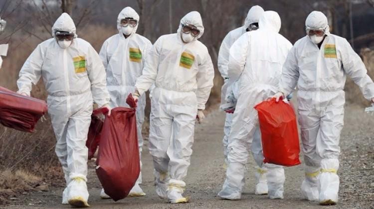 Güney Kore'de kuş gribi tehlikesi