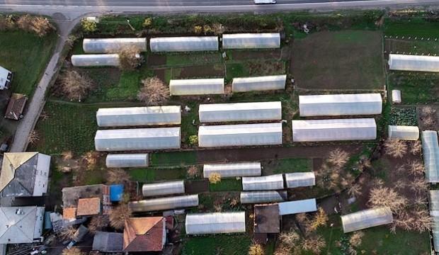 İş yerini kapatıp köye yerleşti, 11 sera kurdu
