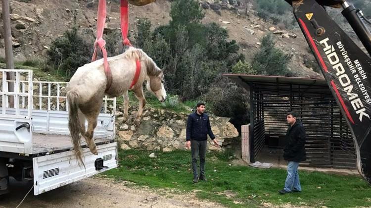 Dereye düşen sahipsiz atı itfaiye kurtardı
