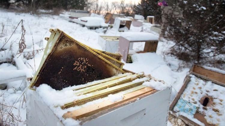 500 bin arıyı öldüren çocuklar gözaltına alındı