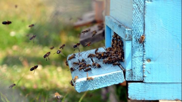 Kovanlarına takviye yapılmazsa arılar ölebilir!