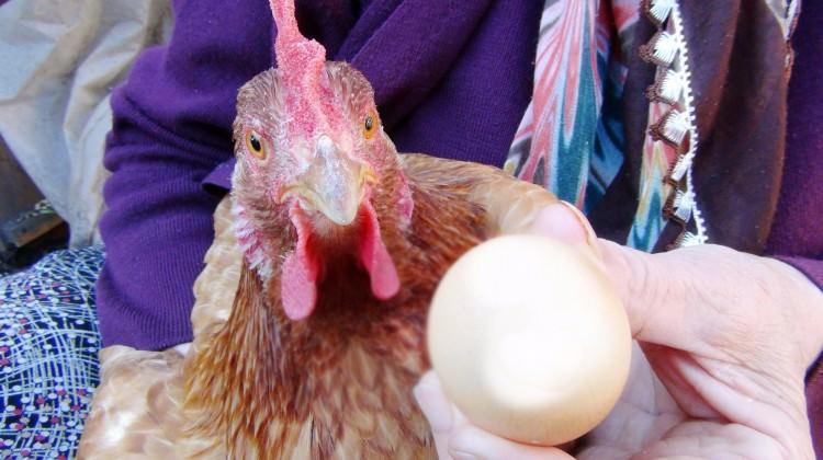 Görenleri şaşırtan yumurta! Bin TL, nedeni...
