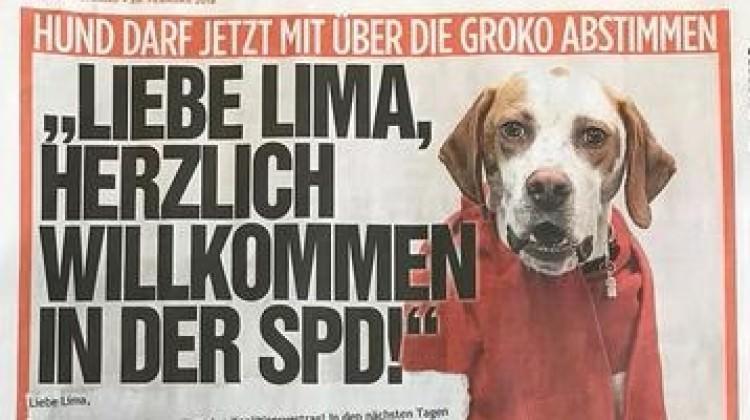 Köpek Lima'yı SPD'ye üye yaptılar!