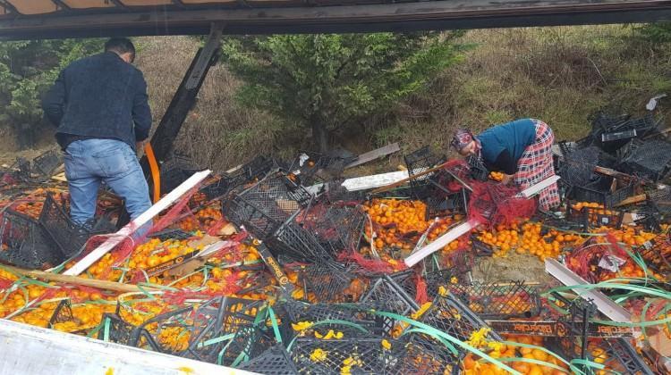 26 ton mandalinayı köylüler topladı