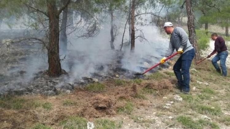 Aydın'da 1 dönümlük ormanlık alan kül oldu
