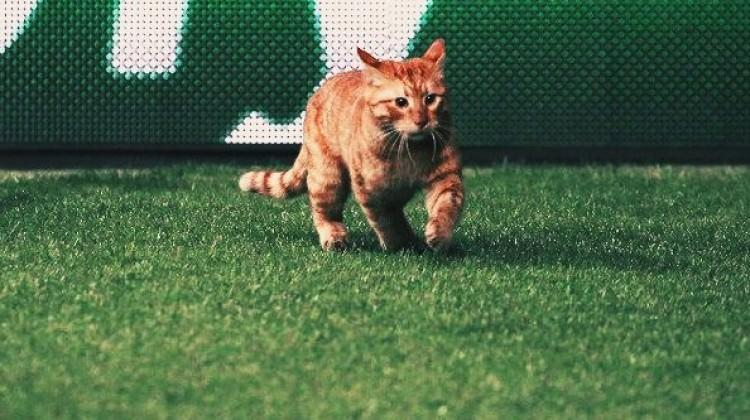 Beşiktaş-Bayern maçında davetsiz misafir