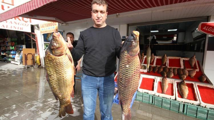 Baraj balıkları tezgahtaki yerlerini aldı