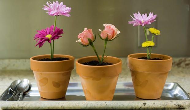 İlkbahar mevsiminde evde bakılacak çiçekler