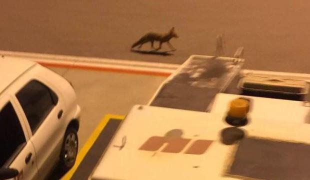Havaalanında şaşırtan görüntü