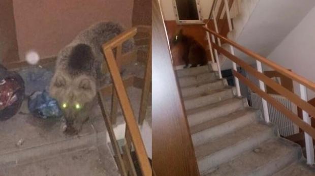 Şoke eden olay! Aç kalan ayılar binaya daldı