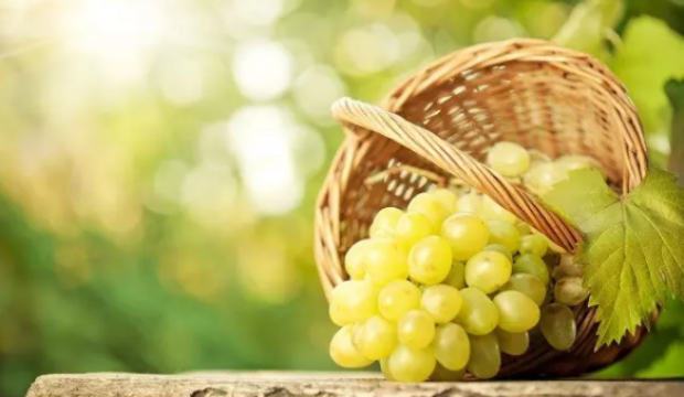 Üzüm: 100 gramda kalori içeriği. Fayda ve üzümün zarar görmesi