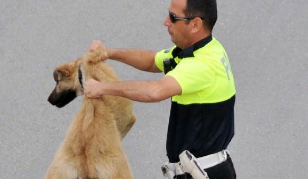 Köpeği yolun karşısına geçirdi ayın polisi seçildi