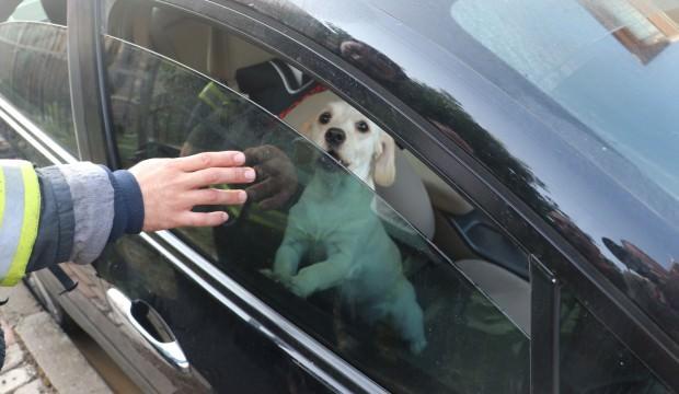 3 kişilik ailenin hayatını köpekleri kurtardı