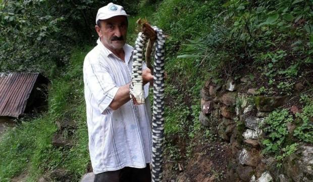 Hopa Engereği denilen yılan bakın ne çıktı