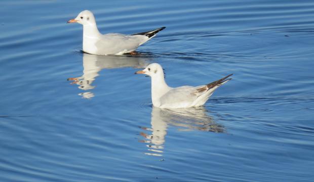 Beyşehir Gölü 4 mevsim farklı kuş türlerini ağırlıyor