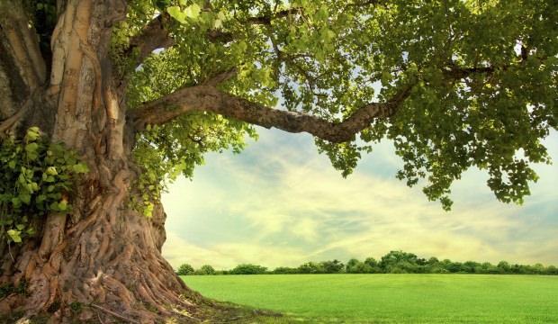 Rüyada Ağaç Görmek Ne Anlama Gelir Rüyada Ağaç Görmenin Tabiri