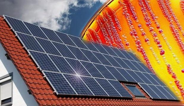 Bakterilerden güneş paneli yaptılar!