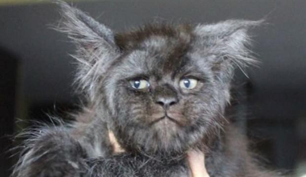 İnsan yüzlü kedi görenleri şaşkına çevirdi