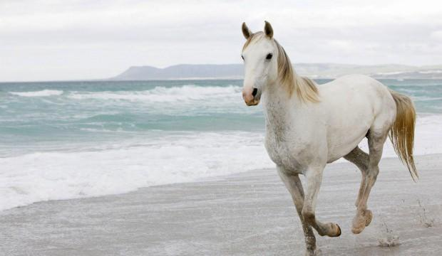 Rüyada at nasıl tabir edilir Rüyada at görmenin anlamı nedir