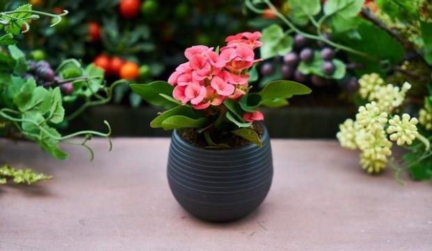 Bitkilerin sulaması nasıl yapılmalı?