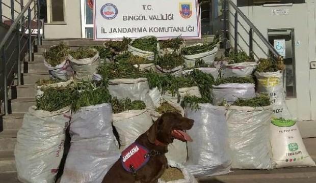 Bingöl'de 300 kilo esrar ele geçirildi
